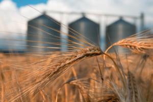 中国アリババ「アント・フィナンシャル」が農業ブロックチェーンを独企業と共同開発