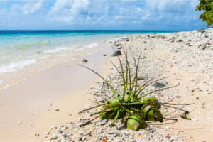 世界初のCBDCに?──マーシャル諸島共和国、基礎技術にアルゴランドを採用【中央銀行デジタル通貨】