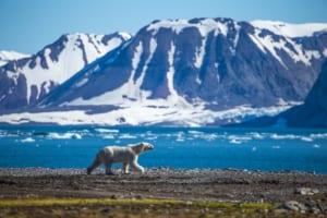 GitHubが北極圏にビットコインコードを埋める理由