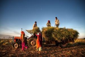 AI×ブロックチェーンで農家とバイヤーをつなぐ──アグリテック「Agri10x」がインドでしかける