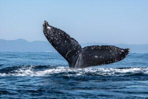 """ビットコイン下落で""""クジラ""""は買い増し、小口投資家は売却か"""