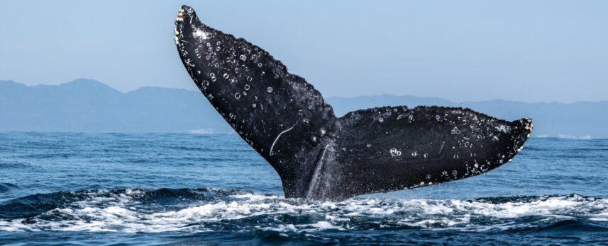 """ビットコイン下落時に""""クジラ""""は買い増し、小口投資家は売却か"""