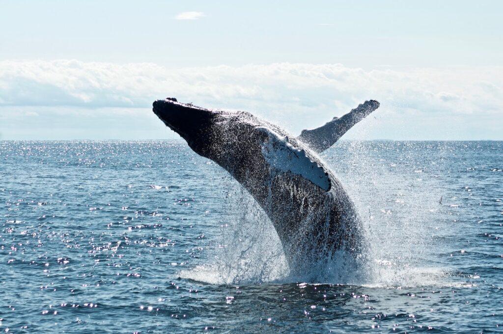 """大口保有者の""""クジラ""""の動きを追う「UniWhales」の狙い"""